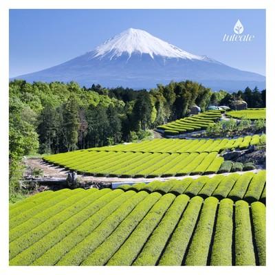 organic tea plantations in asturias