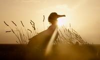 Video-Forum: Albatross. El plástico y el mar. Observando la Naturaleza