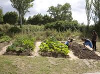 Taller de agricultura ecológica: El jardín sostenible. Huerta Guerrilla