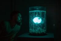 Anna Dumitriu & Alex May: ArchaeaBot