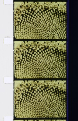 Fragment [Plant Growth], c. 1920