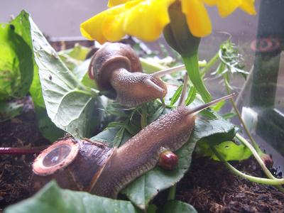 Real Snail Mail 2008-en curso